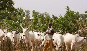 Herdsmen on Rampage: Follow the Money
