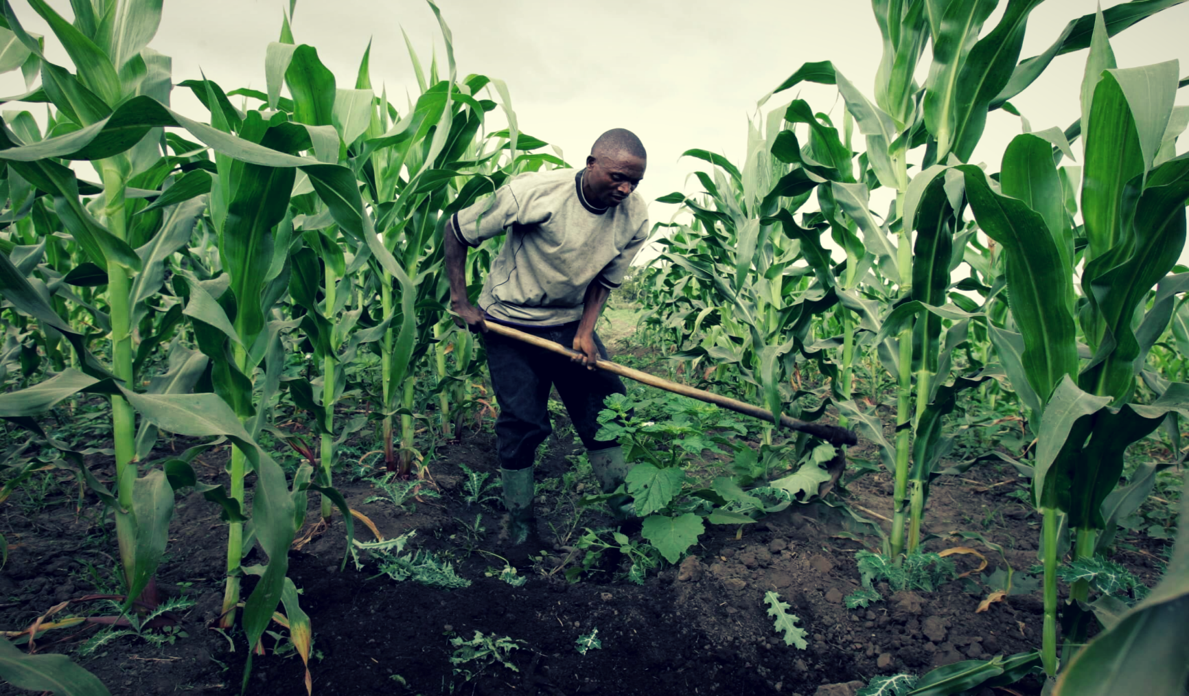 Nigeria needs food security, not food self-sufficiency